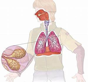 Diagram Respiratory System
