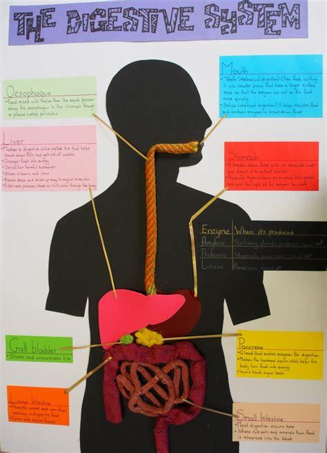 english school learning   digestive system