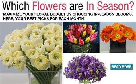 flowers   season flower magnolias  seasons