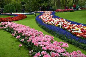 Beautiful Winding Rows of Pink, Red and Purple Flowers ...