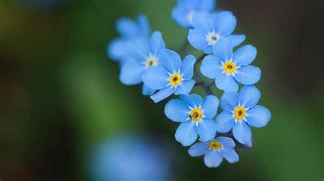 Die Schönsten Blumen Für Den Garten by Die Top 5 Der Sch 246 Nsten Blauen Blumen F 252 R Garten Und Balkon