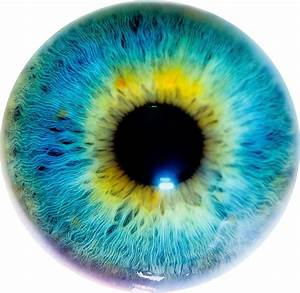 File:Eye I.jpg