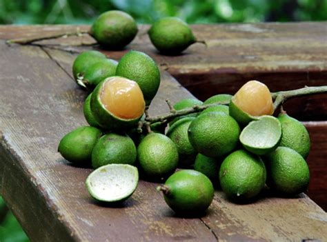 lychee fruit inside kenep caribbean dictionary