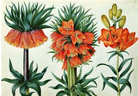Famous Botanical Artists  Botanical Art & Artists