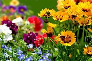 Garten Blumen Pflanzen : blumensortiment hof ~ Markanthonyermac.com Haus und Dekorationen