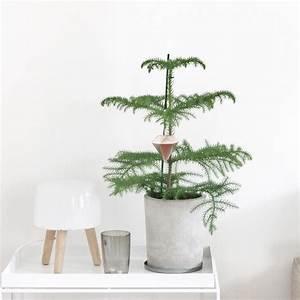 Zimmerpflanzen Für Kinderzimmer : zimmertanne mit weihnachtsdiamant einrichten pinterest gem tliche weihnachten ikea und ~ Orissabook.com Haus und Dekorationen