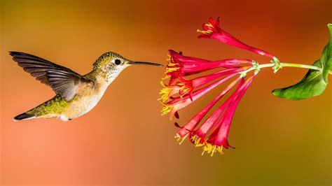 create  hummingbird friendly yard audubon