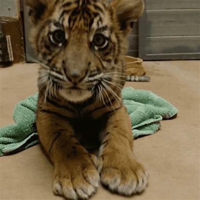 Animals Zoo Giphy Gifs