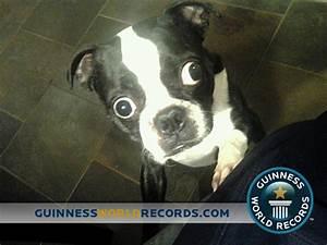 Largest Dog Eyes Guinness World Record