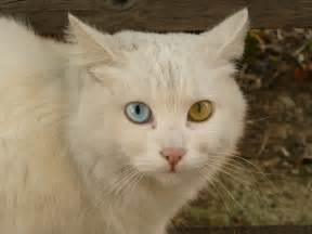 different cats file cat briciola with pretty and different colour of