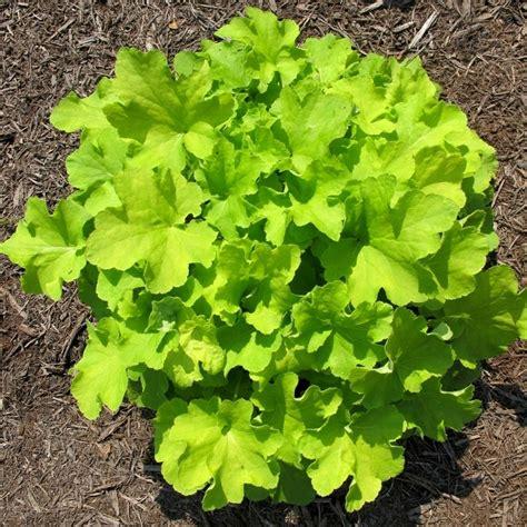 plante exterieur resistant au gel plantes pour terrasses exterieur d appartement id es de plante resistant au gel agaroth