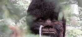Discovering Bigfoot Is a Bigfoot Documentary Made by a Bigfoot Hoaxer ...