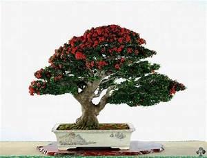 die besten 25 zen garten mini ideen auf pinterest With whirlpool garten mit bonsai empire