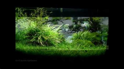 Most Beautiful Aquascapes by Most Beautiful Underwater Landscapes Aquascapes