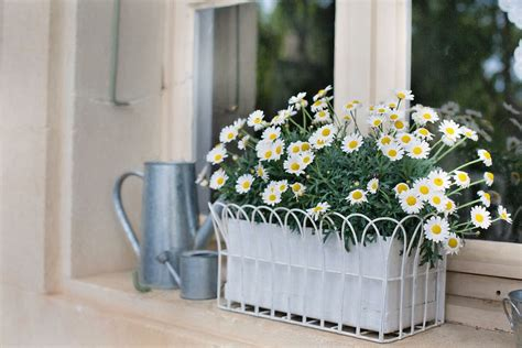 Window Sill Box Plants by 37 Gorgeous Window Flower Boxes With Pictures