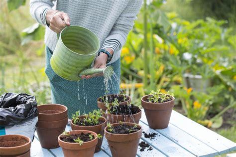 prevent white fuzzy mold  seedlings