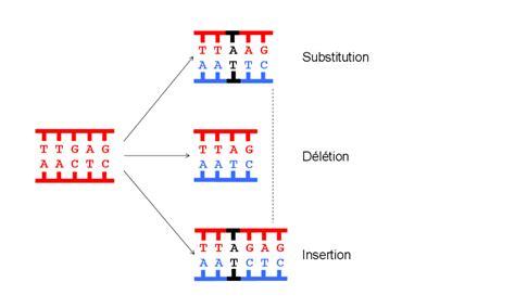 Modification Utation by Effets De La Radiactivit 233 Sur L Organisme Les Japonais