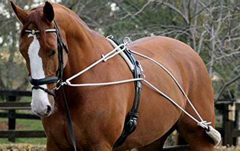 Lunging Your Horse? Then You Need To Check These Out