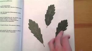 Was Ist Ein Herbarium : blattherbarium anfertigen pflanzensammlung anlegen youtube ~ A.2002-acura-tl-radio.info Haus und Dekorationen