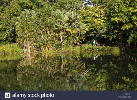 Botanischer Garten Singapur Bilder by Singapur Botanische G 228 Rten Stockfotos Singapur