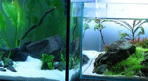 wie warm muss ein aquarium sein der nano cube ein aquarium muss nicht teuer sein