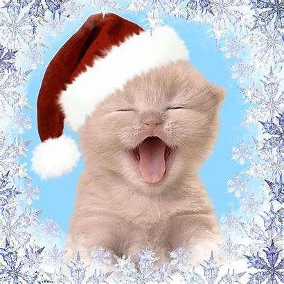 Kitty Happy Christmas