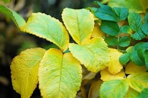 Bedeutung Farbe Grün : bedeutung der farbe gelb der griff nach der gelben sonne ~ Buech-reservation.com Haus und Dekorationen