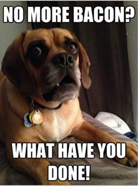 Meme Dogs - shocked dog meme shows a pup in a state of perpetual surprise