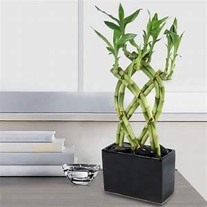 Tonnelle En Bambou : les 25 meilleures id es de la cat gorie bambou en pot sur ~ Premium-room.com Idées de Décoration