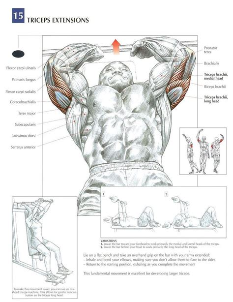 Standing Kickbacks Exercise by Tricep Extensions Aka Skull Crushers Tricep Exercises