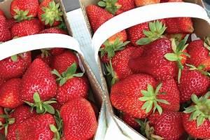 Plant De Fraise : albion fraisier plant de fraises ~ Premium-room.com Idées de Décoration