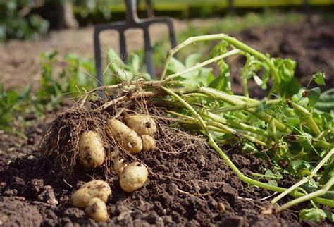 Organic Kitchen Garden Definition by How We Run A Modern Organic Kitchen Garden In