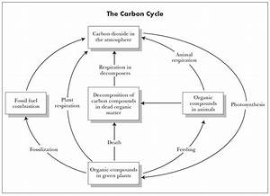 Rock cycle diagram pdf rock free engine image for user manual download ccuart Image collections