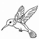 Hummingbird Printable Coloring Pages Print Animal Bedroom Getcolorings Getdrawings sketch template