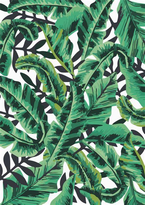 tropical leaf wallpaper wallpapersafari