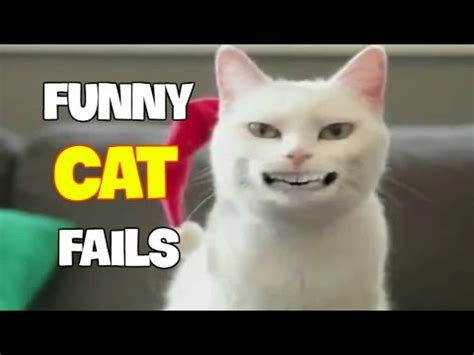 funny cats fails compilation  vine zone funnycattv
