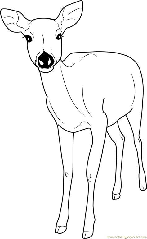 Coloring Deer by Formosan Sika Deer Coloring Page Free Deer Coloring