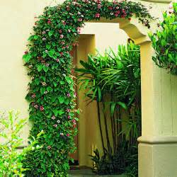 Fast Growing Climbing Plant Vines
