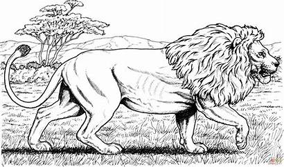 Coloring Lion Pages African Walking Main Printable