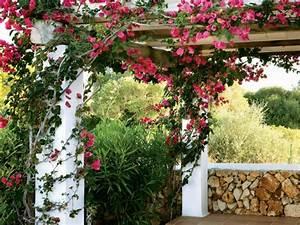 Kletterpflanzen Für Pergola : top 12 der sch nsten kletterpflanzen f r garten und balkon ~ Markanthonyermac.com Haus und Dekorationen