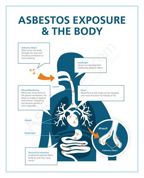 asbestos exposure risks in occupations products jobsites