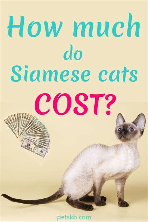 much siamese cost cats cat kittens ragdoll petskb