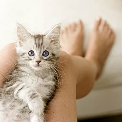 cat care how to raise a healthy cat health