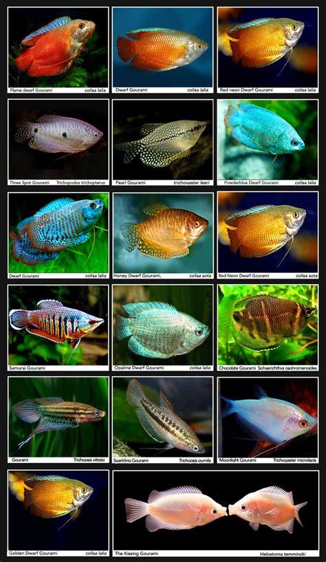 pin  freshwater fish