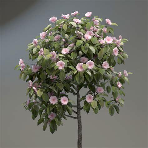 small flowering trees small flowering trees car interior design