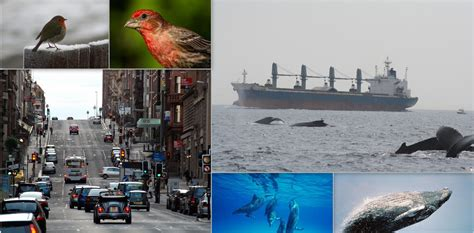 noise pollution  changing animal behaviour
