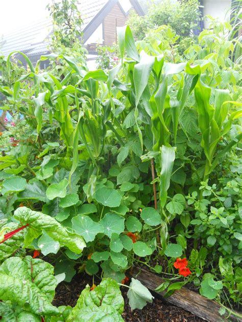 Best 25+ Permaculture Garden Ideas On Pinterest