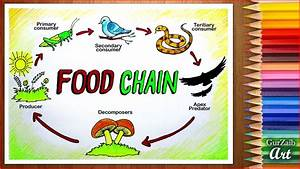 How To Draw Food Chain Diagram Poster Chart Drawing For