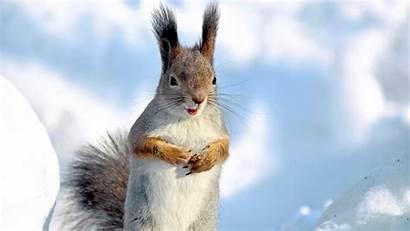 Winter Animals Desktop Resolution Screen Wallpapersin4k