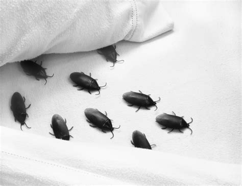 bugs   bed   handle hallucinations alzheimer